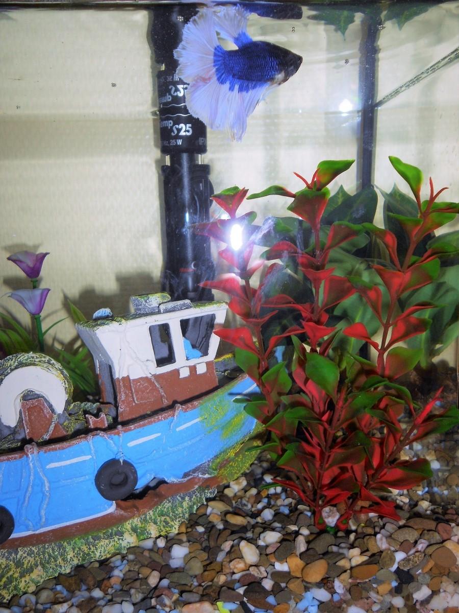 Plante ludwigia plantes artificielles pour aquariums for Plante pour aquarium