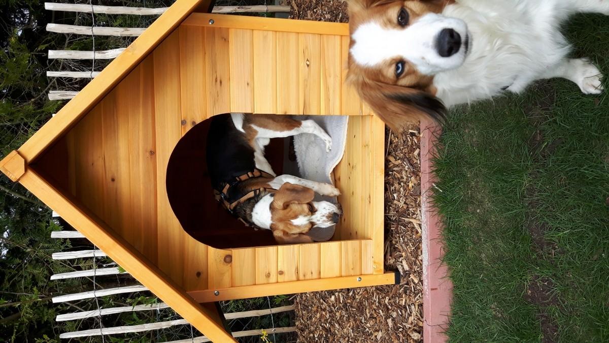 Avis sur niche d 39 ext rieur cl o pour chats et chiens - Niche pour chat exterieur plan ...