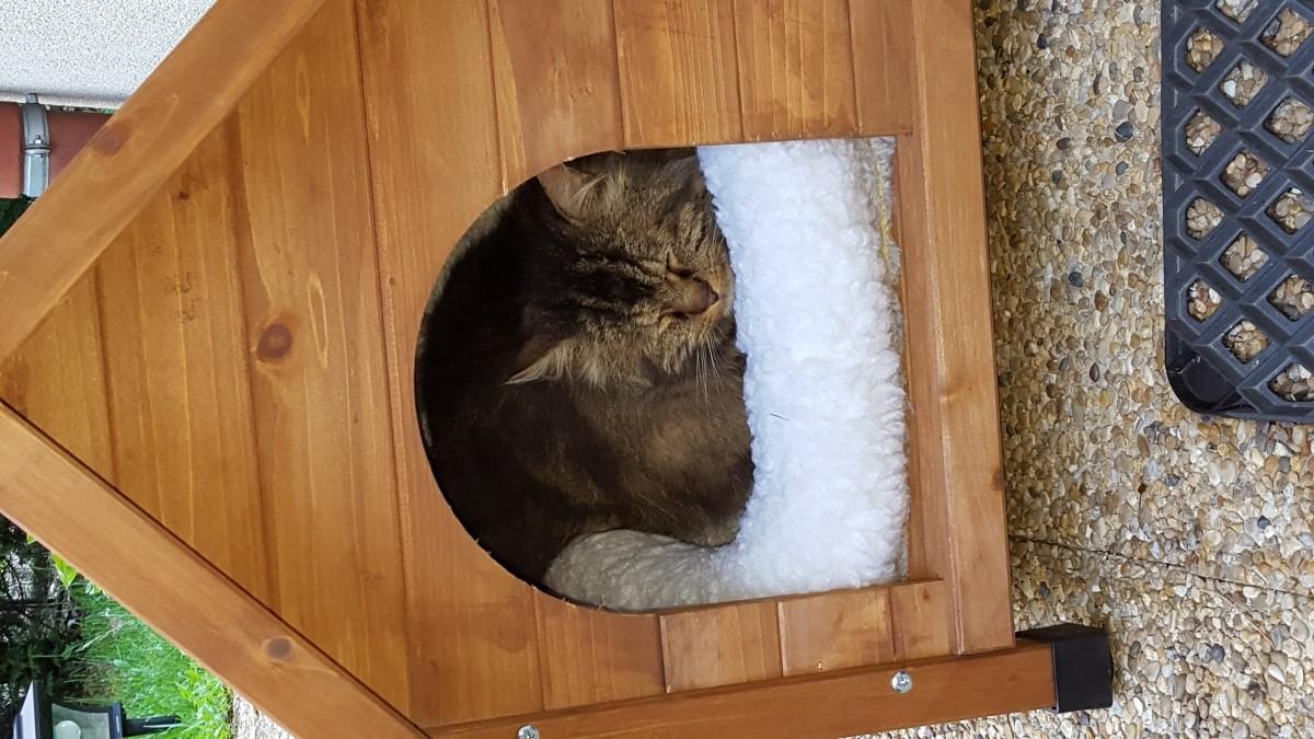 niche d 39 ext rieur cl o pour chats et chiens niche. Black Bedroom Furniture Sets. Home Design Ideas