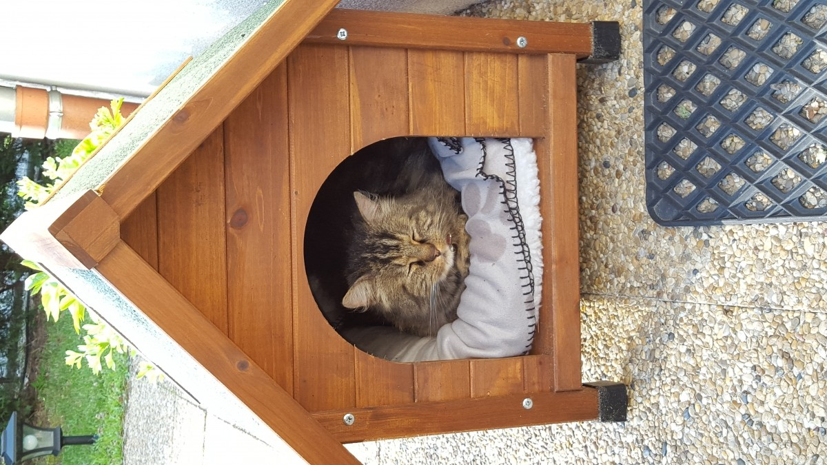 Plan niche pour chat exterieur maison design - Niche chat design ...
