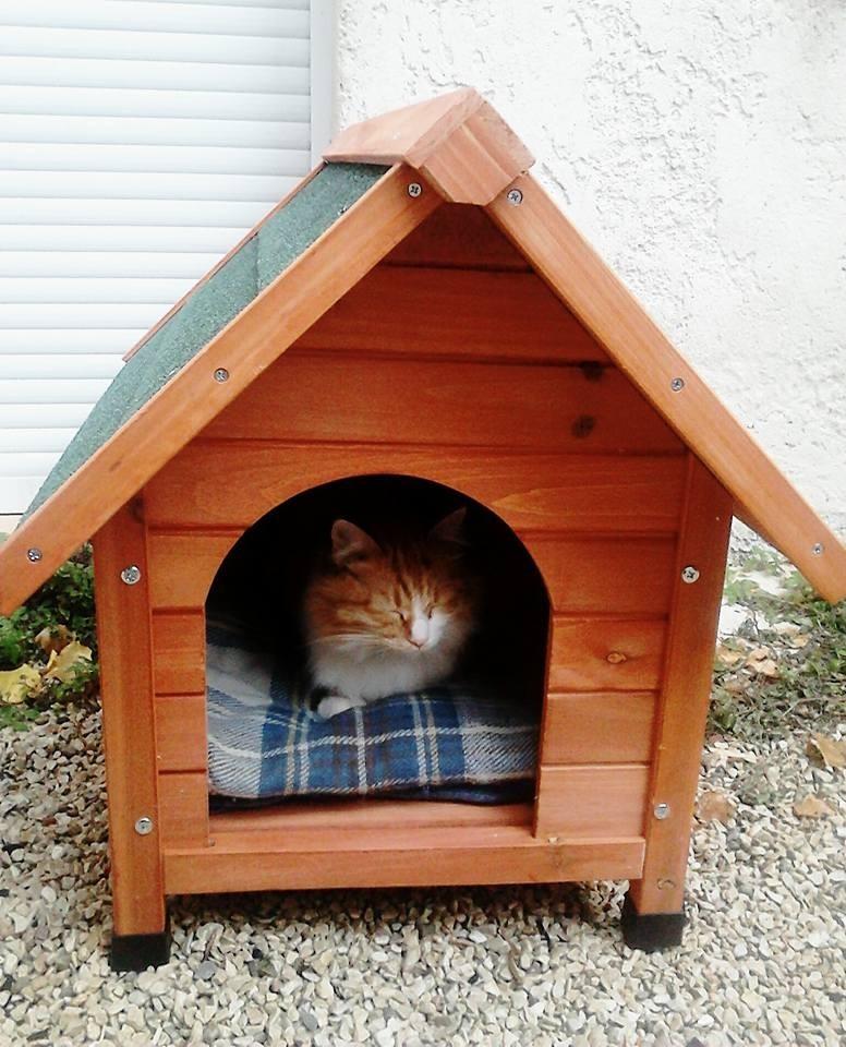 Niche d 39 ext rieur cl o pour chats et chiens niche for Niche exterieur pour chat