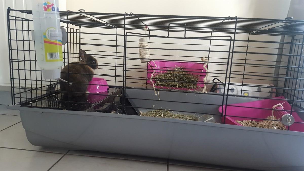 cage nero 3 de luxe black fuschia pour lapin et cochon d. Black Bedroom Furniture Sets. Home Design Ideas