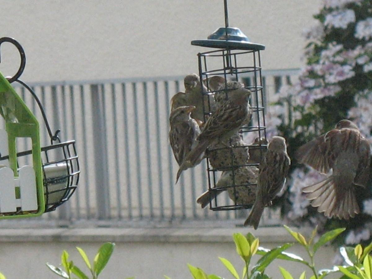 nature mix m lange pour oiseaux du ciel nourriture oiseaux. Black Bedroom Furniture Sets. Home Design Ideas