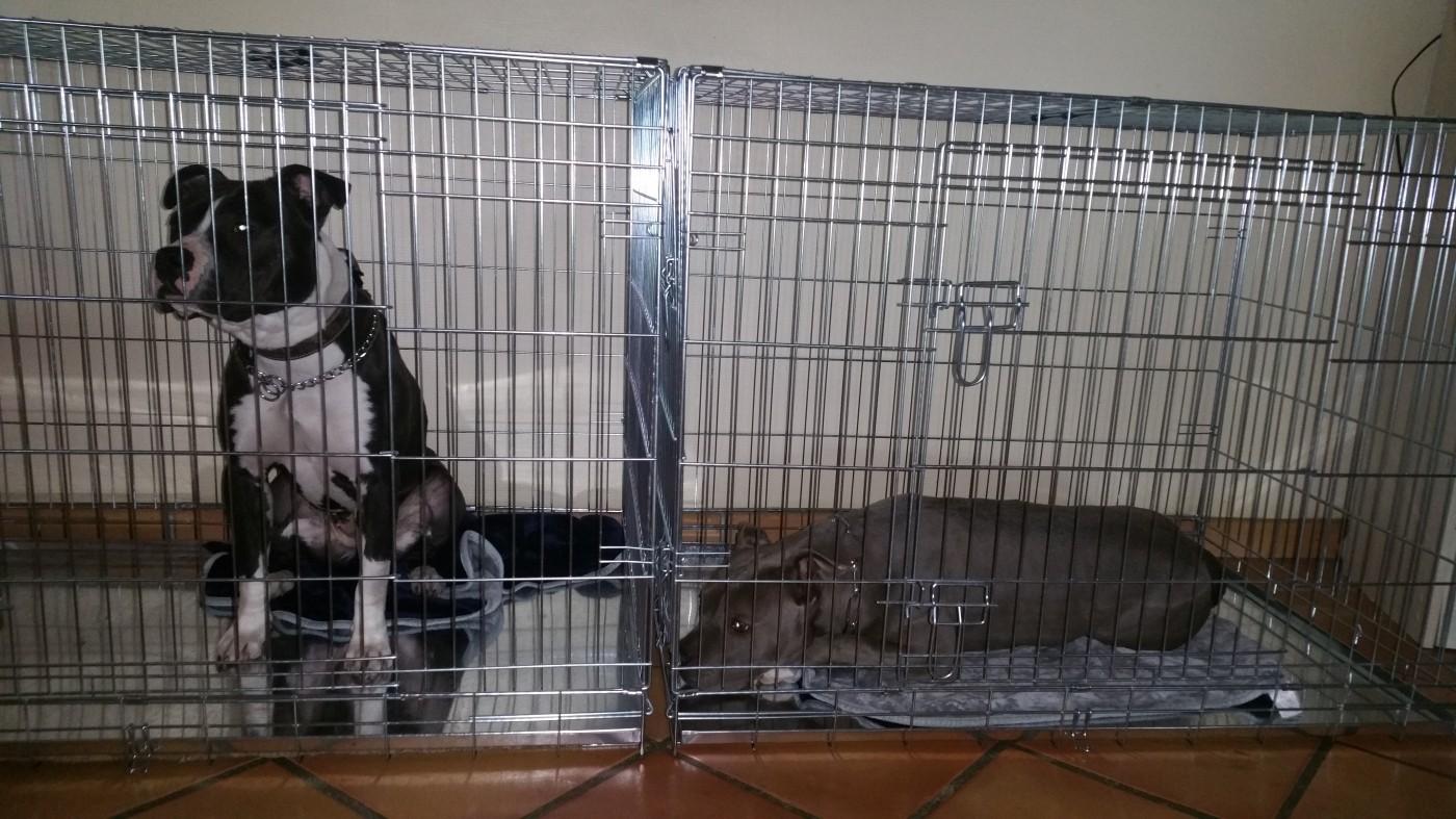 avis sur cage de transport pour chien zolia xena avec fond. Black Bedroom Furniture Sets. Home Design Ideas