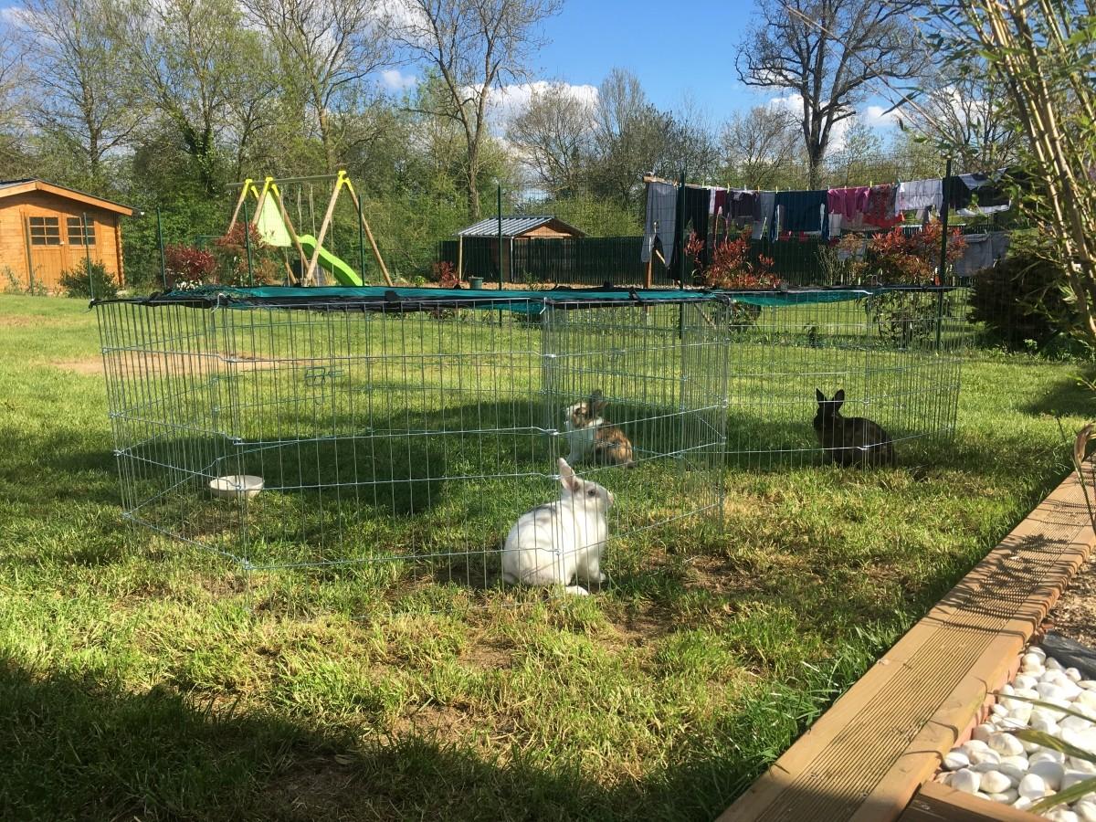 Avis sur parc d 39 ext rieur zolia opi en m tal pour petits for Parc pour lapin exterieur