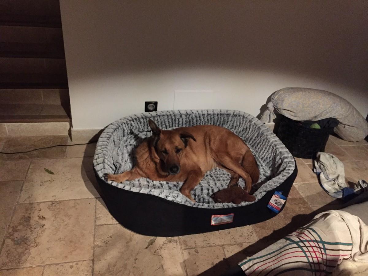 Vital lit lino pour chien m moire de forme panier chien et corbeille - Lit memoire de forme ...