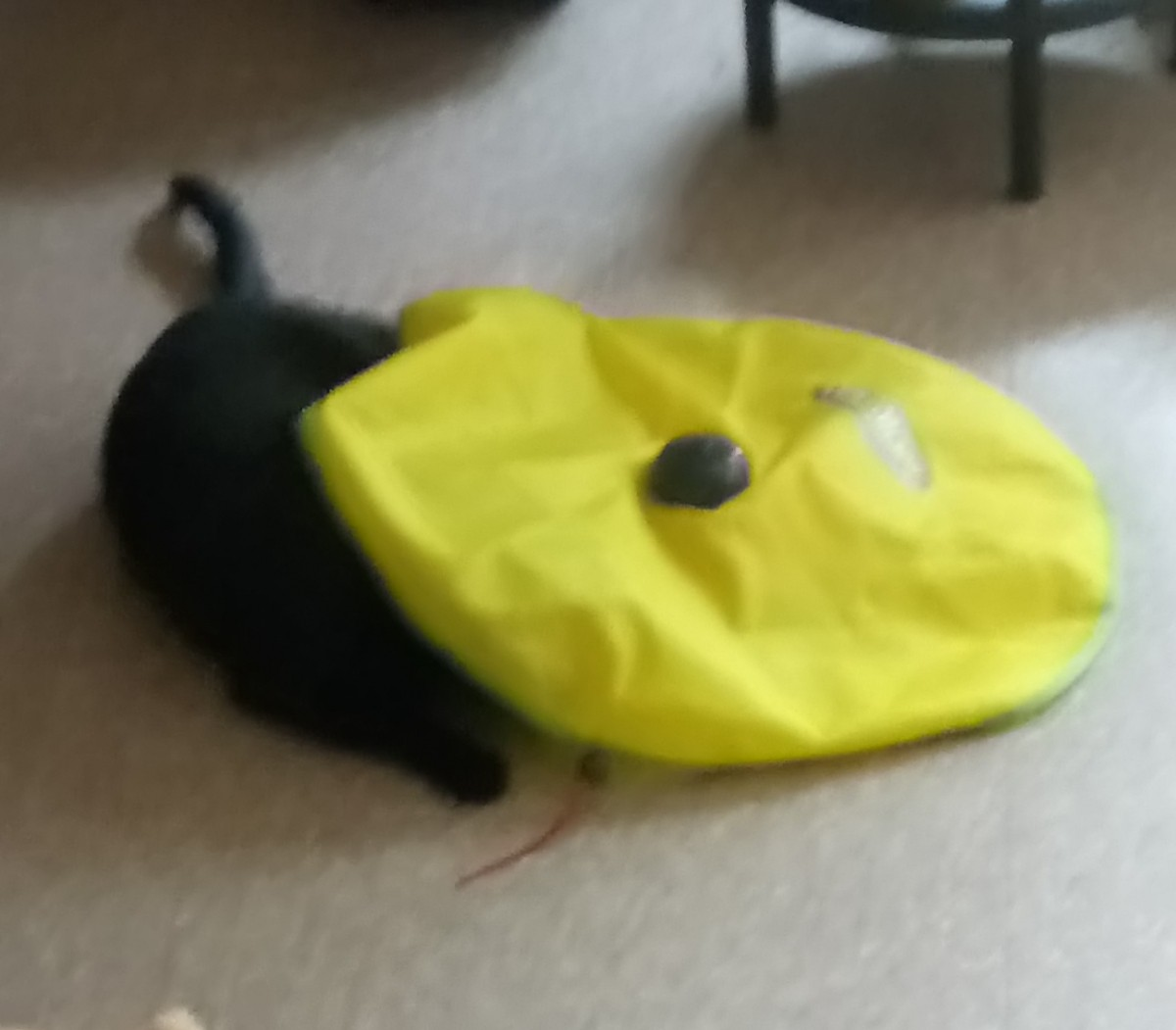 jouet chat cats miaou