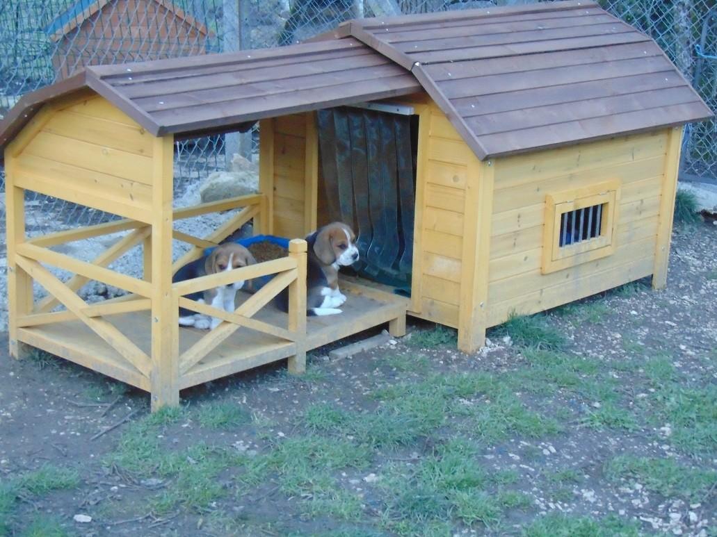 niche pour chien avec terrasse couverte zolia timeo niche. Black Bedroom Furniture Sets. Home Design Ideas