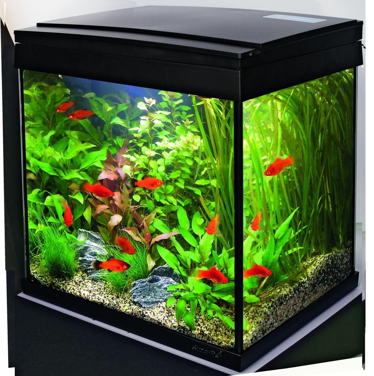 aquarium et meuble pour aquarium. Black Bedroom Furniture Sets. Home Design Ideas