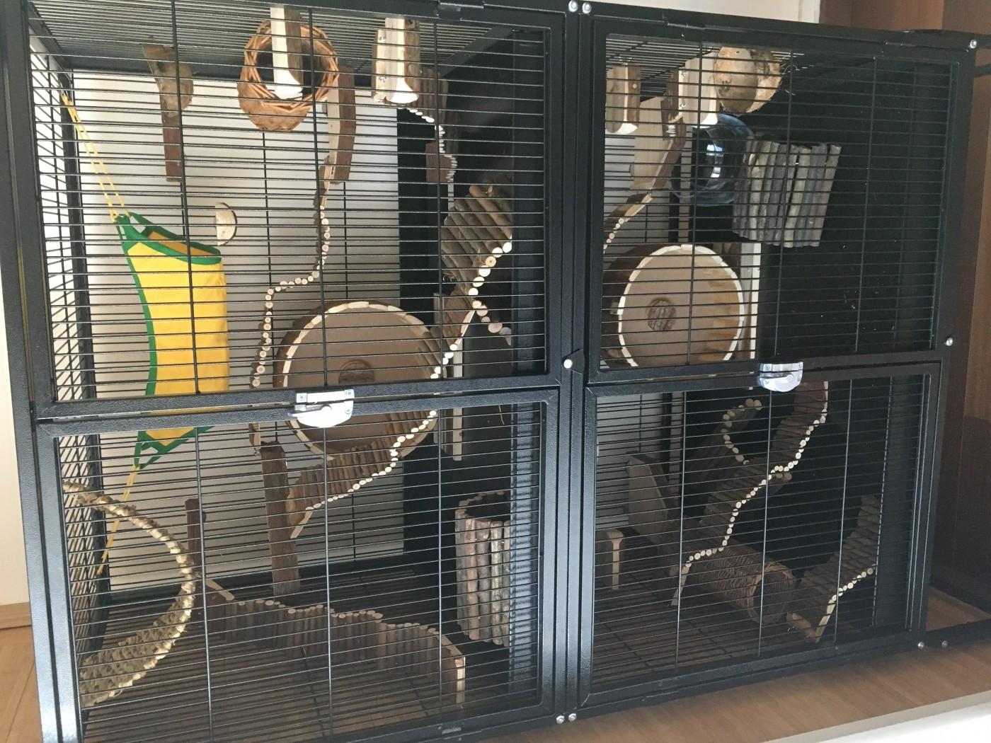 Cage zolia funzy pour furet et rongeurs cage furet - Acheter un furet ...