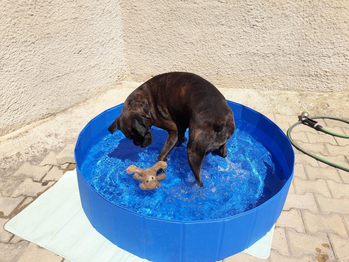 Nouveau piscine pour chien en pvc piscine for Piscine pour chien pas cher