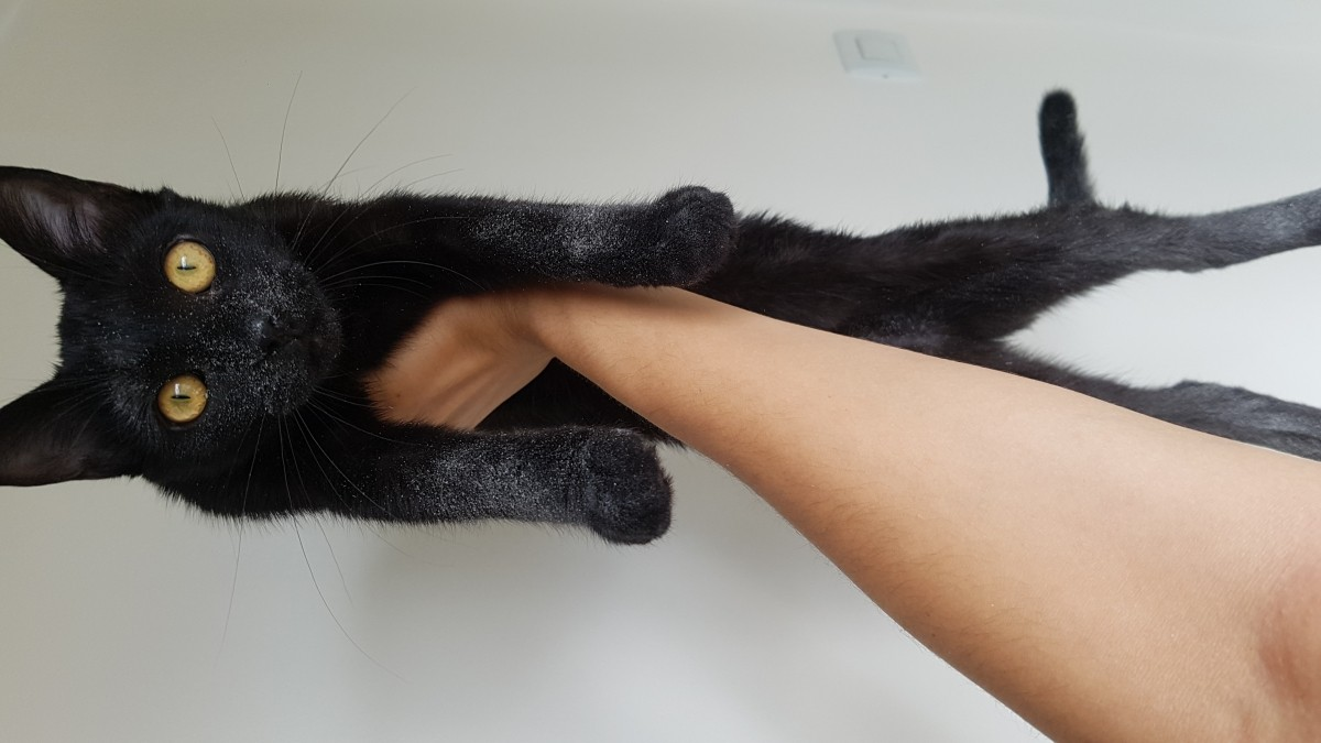 litiere chat almo nature