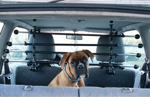 Avis sur grille pour voiture doggy stop pour chien - Grille pour chien en voiture ...