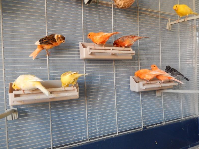 mangeoire double pour cage oiseaux accessoires pour. Black Bedroom Furniture Sets. Home Design Ideas