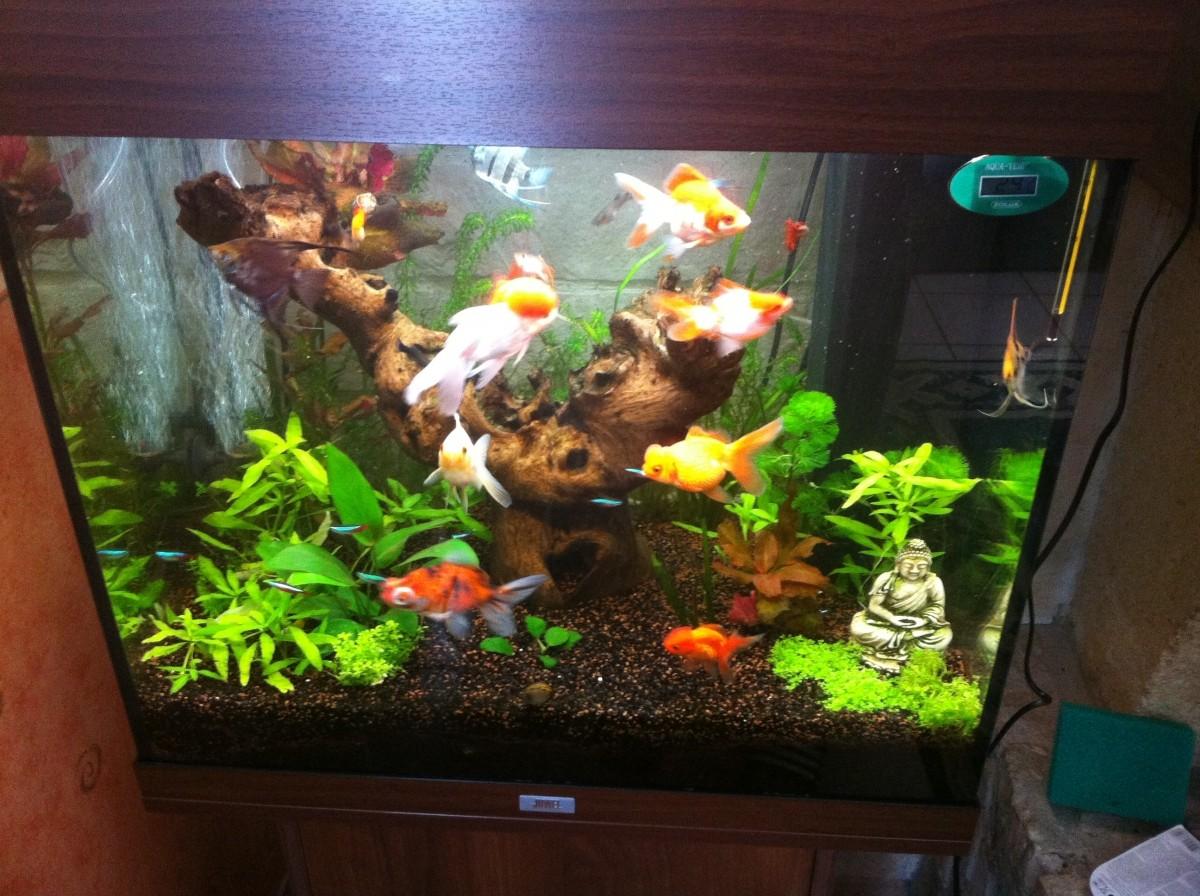 Tetramin flocons pour poissons tropicaux de 100ml 10l for Poisson tropicaux