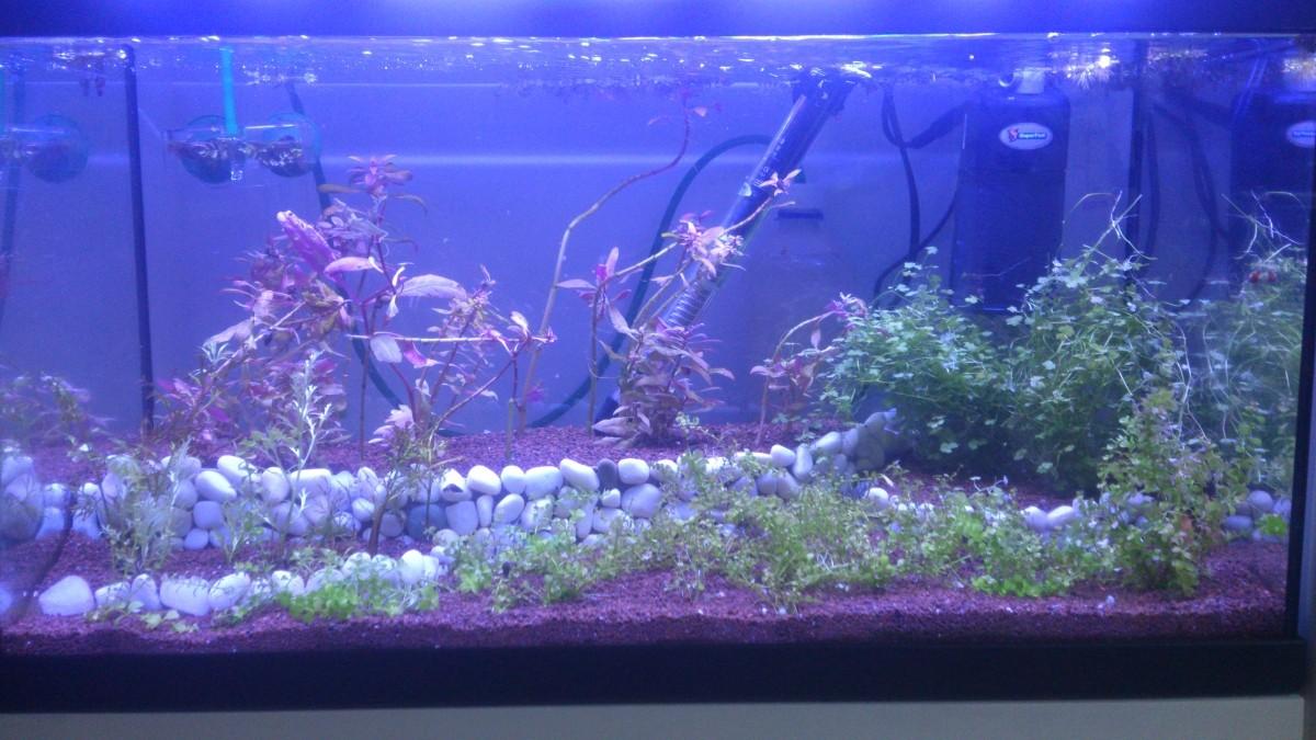 Silicone pour aquarium 80 ml zolux silicone et colle for Aquarium zolux