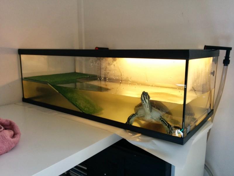 avis sur bac tortue 80x35x25cm. Black Bedroom Furniture Sets. Home Design Ideas