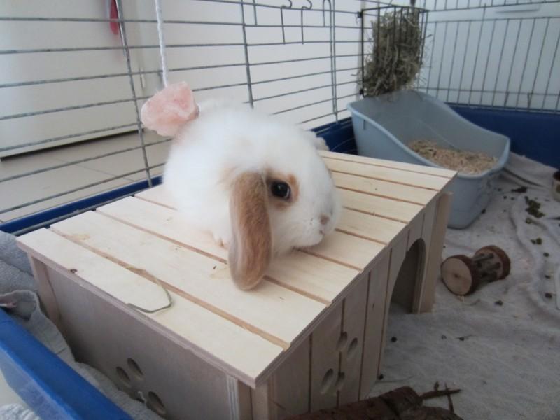 v 234 tement pour lapin nain