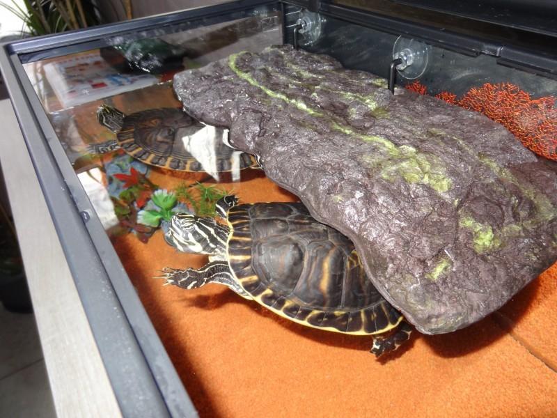 Il t flottant pour tortue bac tortue for Filtre aquarium tortue