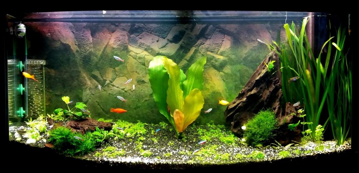 ferropol 24 10 ou 50 ml engrais journalier pour plantes d 180 aquarium substrat et engrais plante