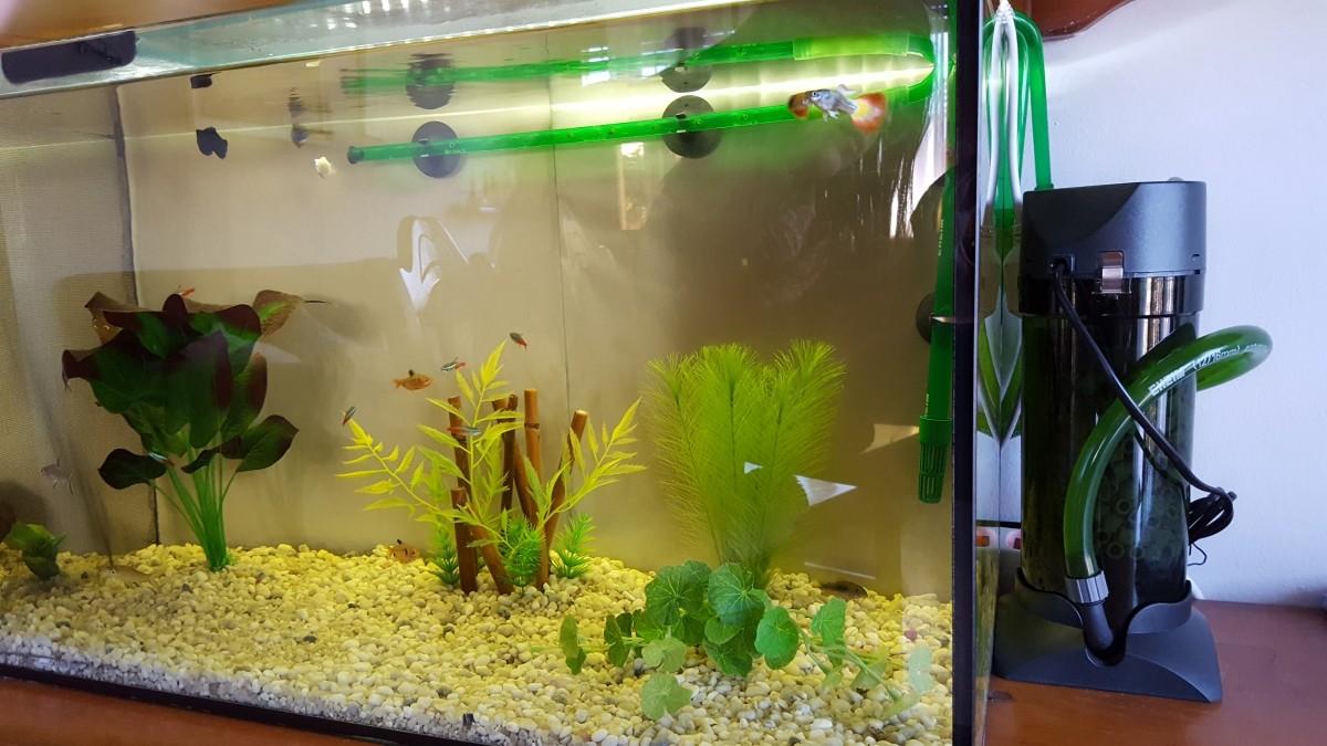 Filtre externe pour aquarium eheim classic 2211 filtre for Pompe externe aquarium