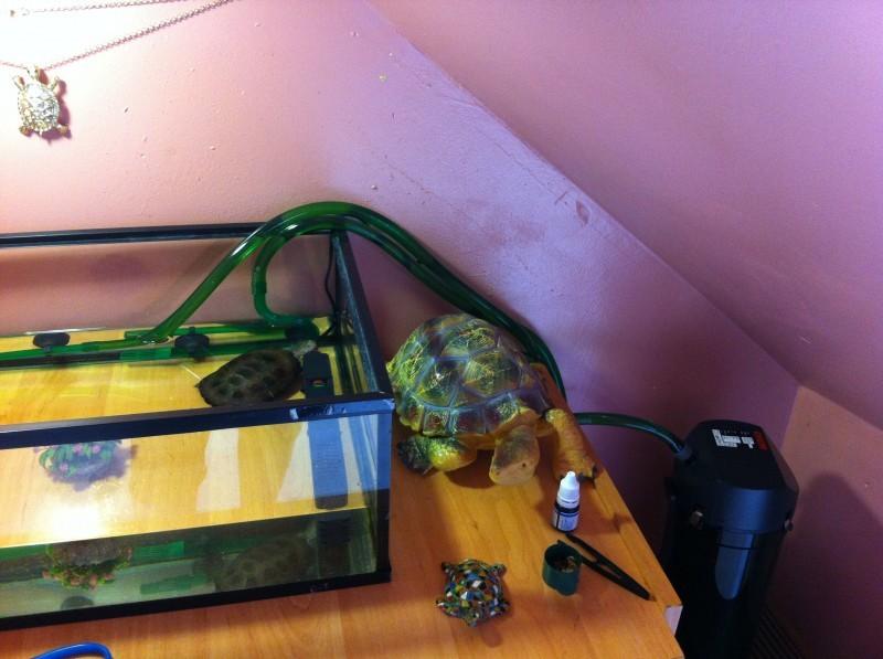 Avis sur filtre externe eheim classic 2213 avec mousses et for Petit aquarium avec pompe