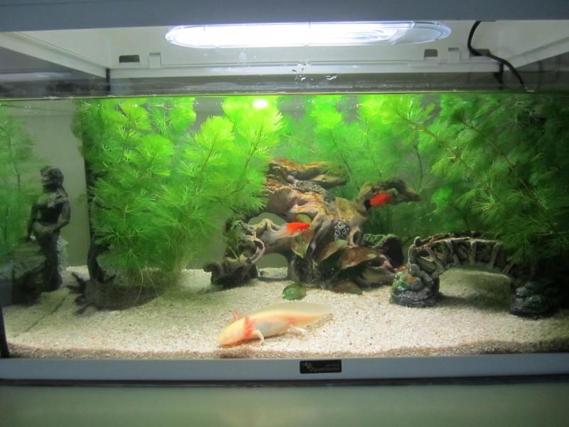 décoration aquarium pont