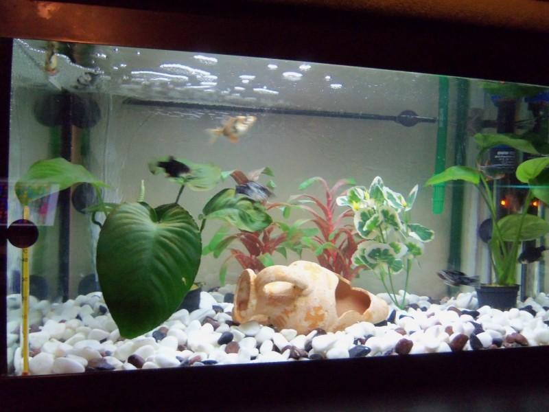 Plante pour aquarium en soie hydrocotyle plantes for Aquarium plastique