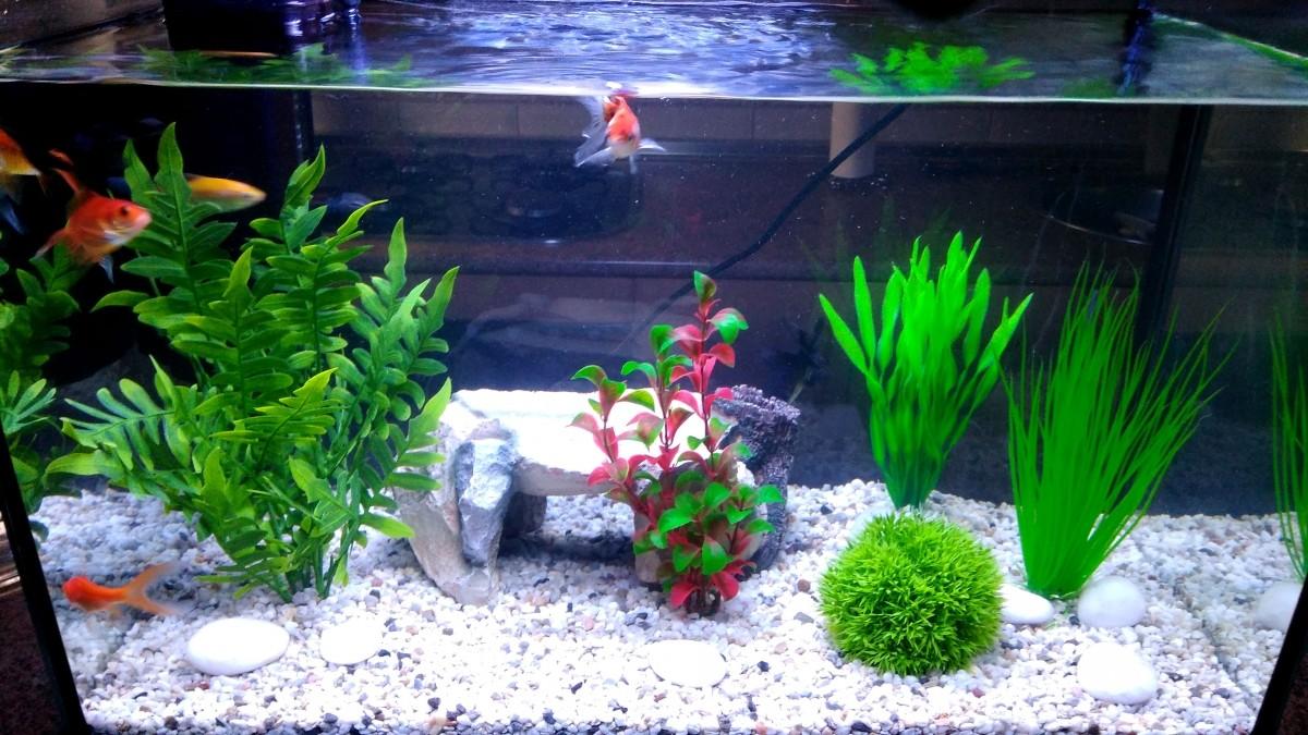Avis sur plante en plastique pour aquarium rotala for Aquarium plastique