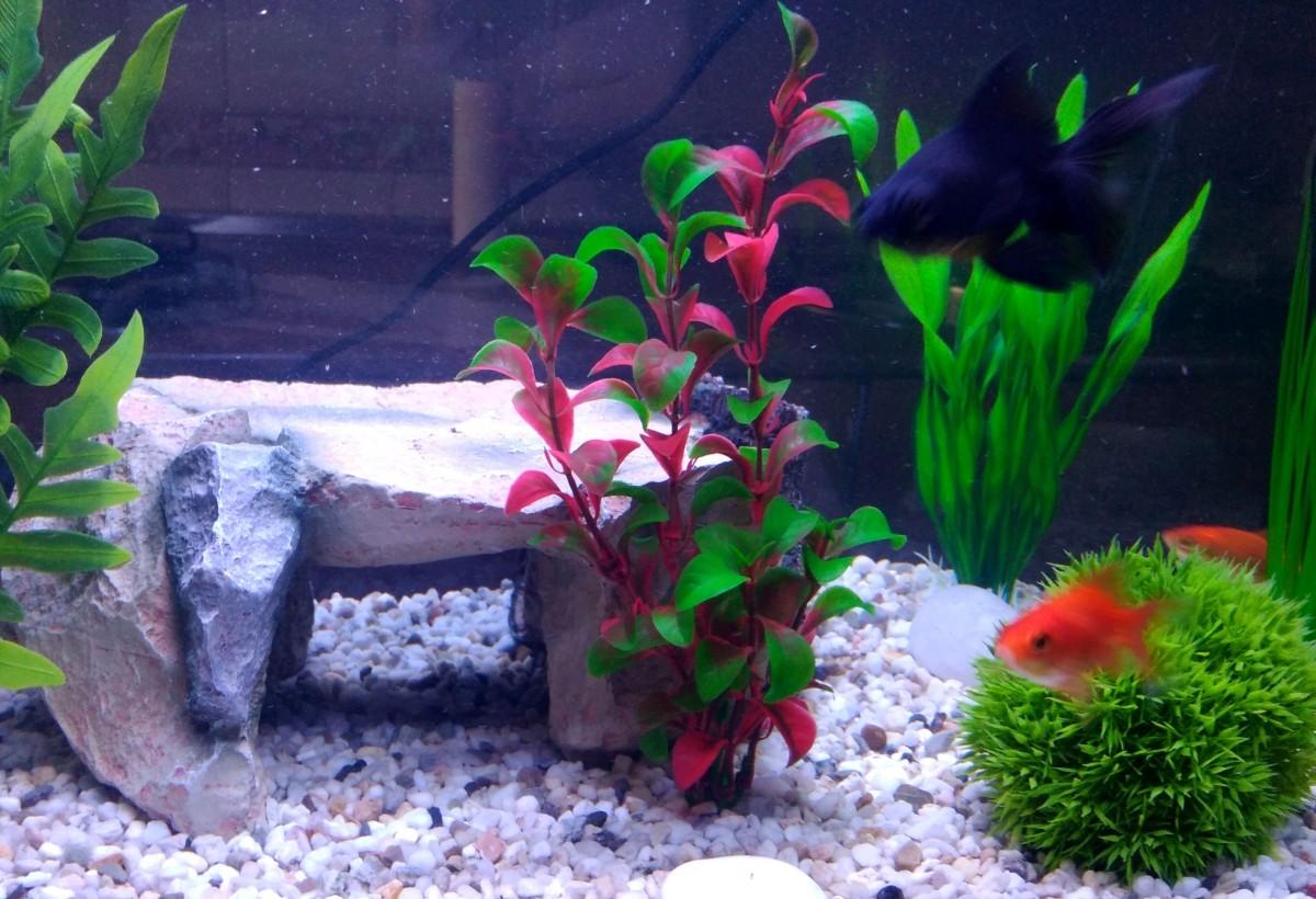 Plante en plastique pour aquarium rotala plantes for Aquarium plastique