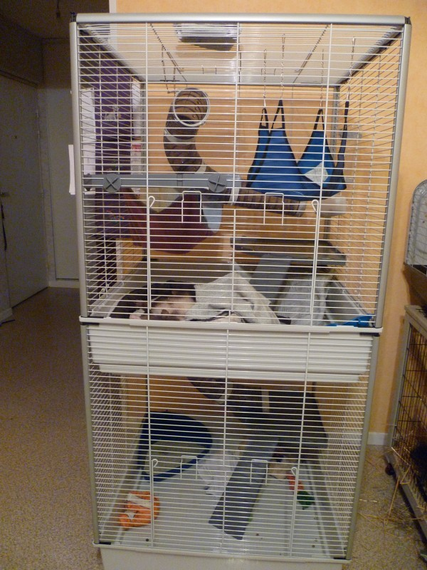cage ferplast furet tower deux niveaux pour furet cage furet. Black Bedroom Furniture Sets. Home Design Ideas
