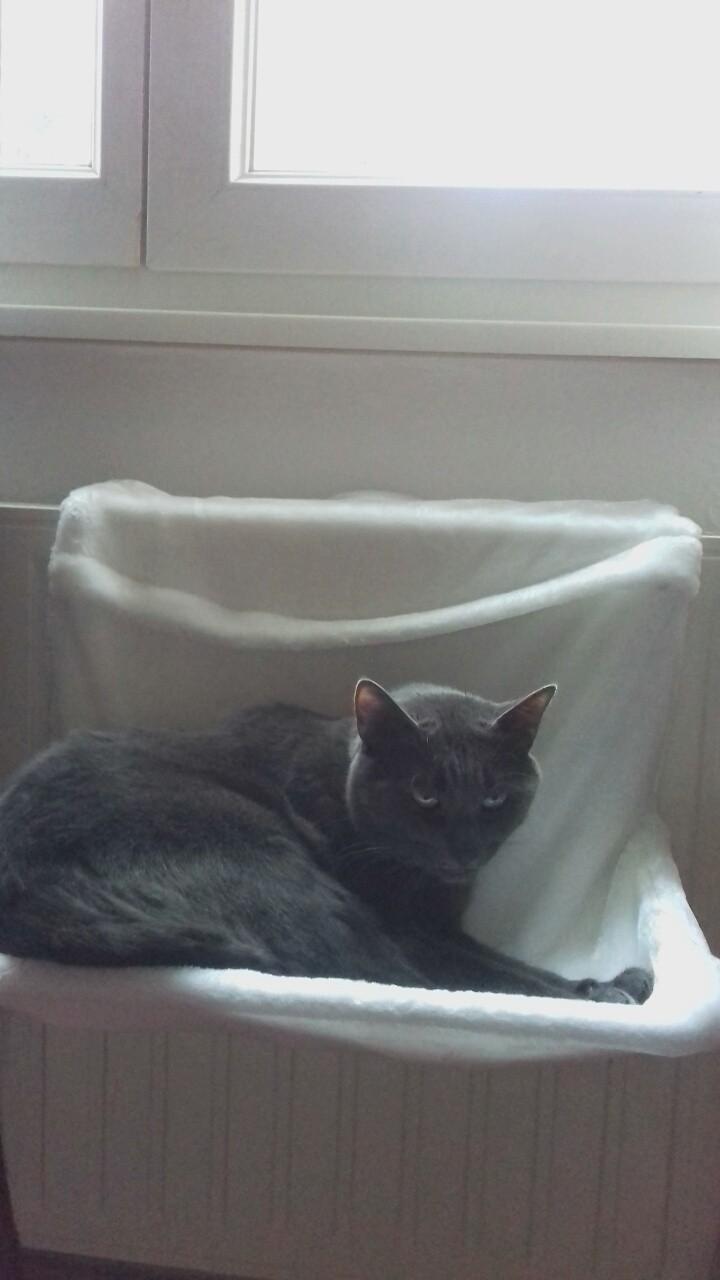 lit hamac radiateur pour chat deluxe couchage chat. Black Bedroom Furniture Sets. Home Design Ideas