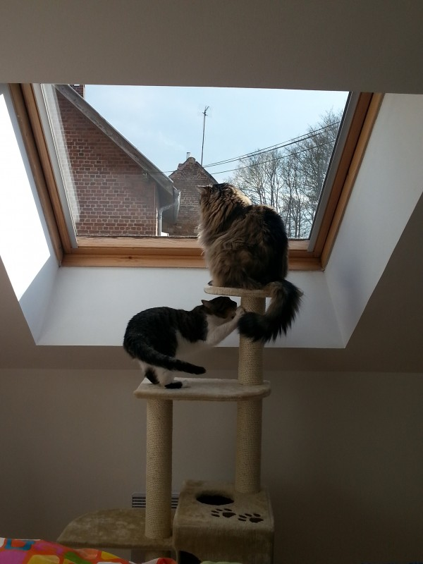 avis sur arbre a chat canteali beige. Black Bedroom Furniture Sets. Home Design Ideas