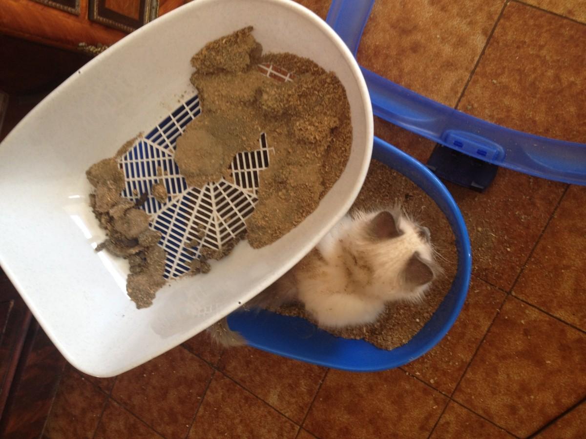 Bac liti re pour chat avec tamis berto bac et maison de toilette - Litiere chat autonettoyante pas cher ...