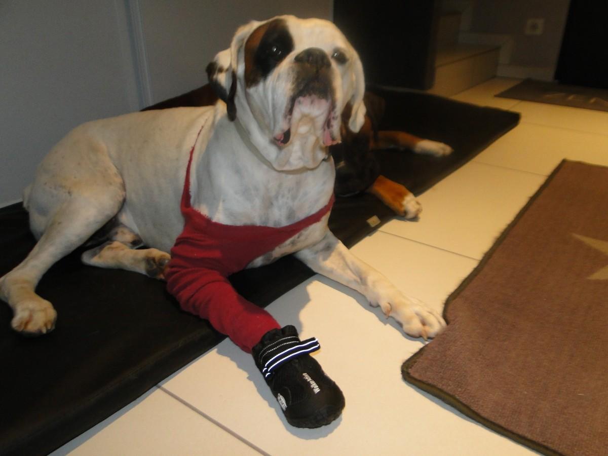bottes de protection pour chien walker active chaussures. Black Bedroom Furniture Sets. Home Design Ideas