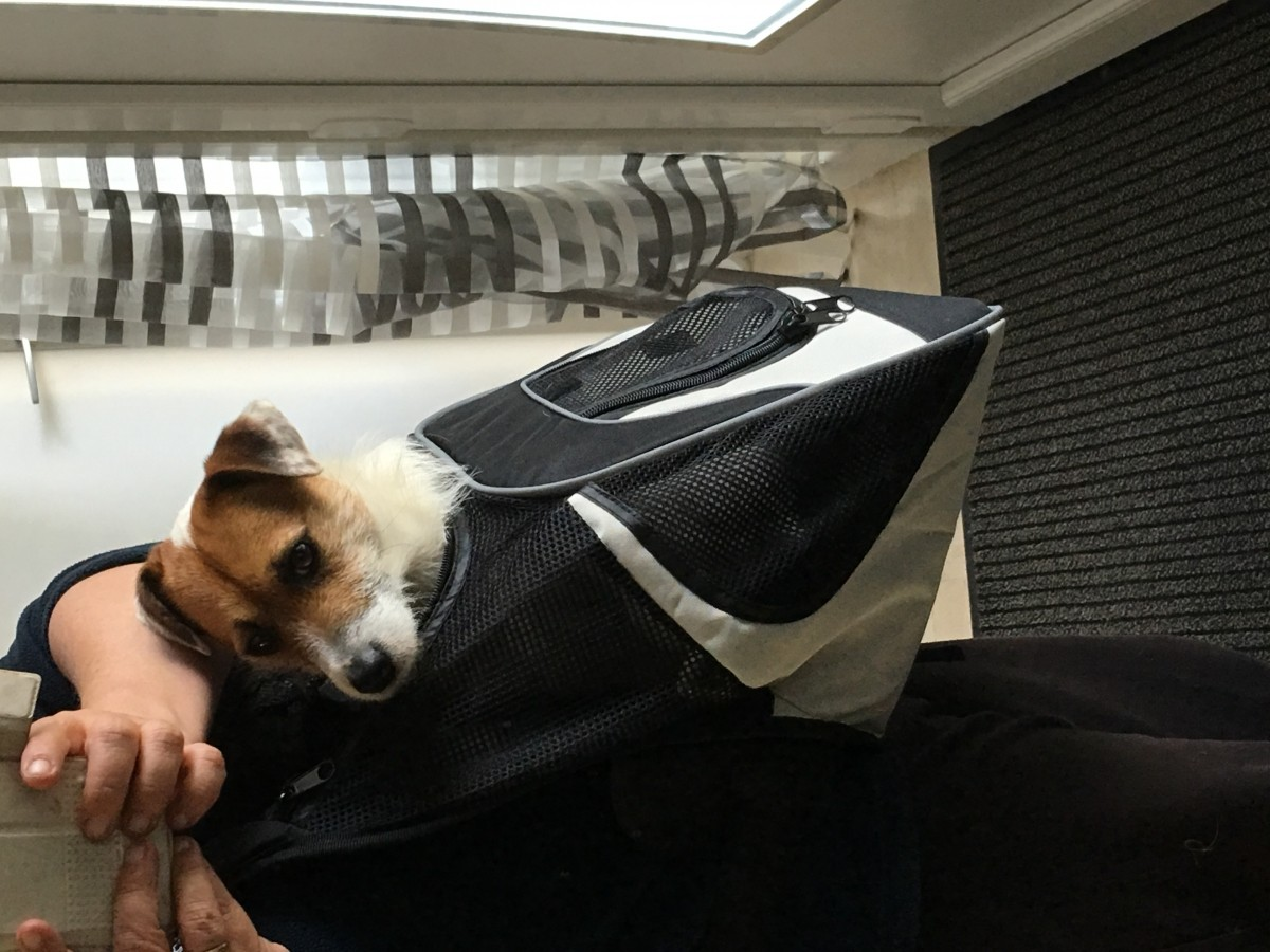 Sac ventral savina sac de transport - Sac ventral pour chien ...