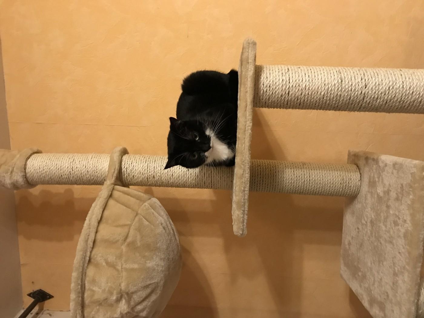 Arbre chats madrid du sol au plafond beige arbre chat for Du sol au plafond