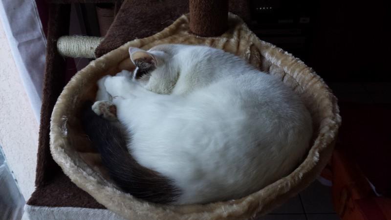 poteau chat Découvrez les offres de la catégorie poteau aluminium gris comme trixie et karlie avec prixmoinscher.