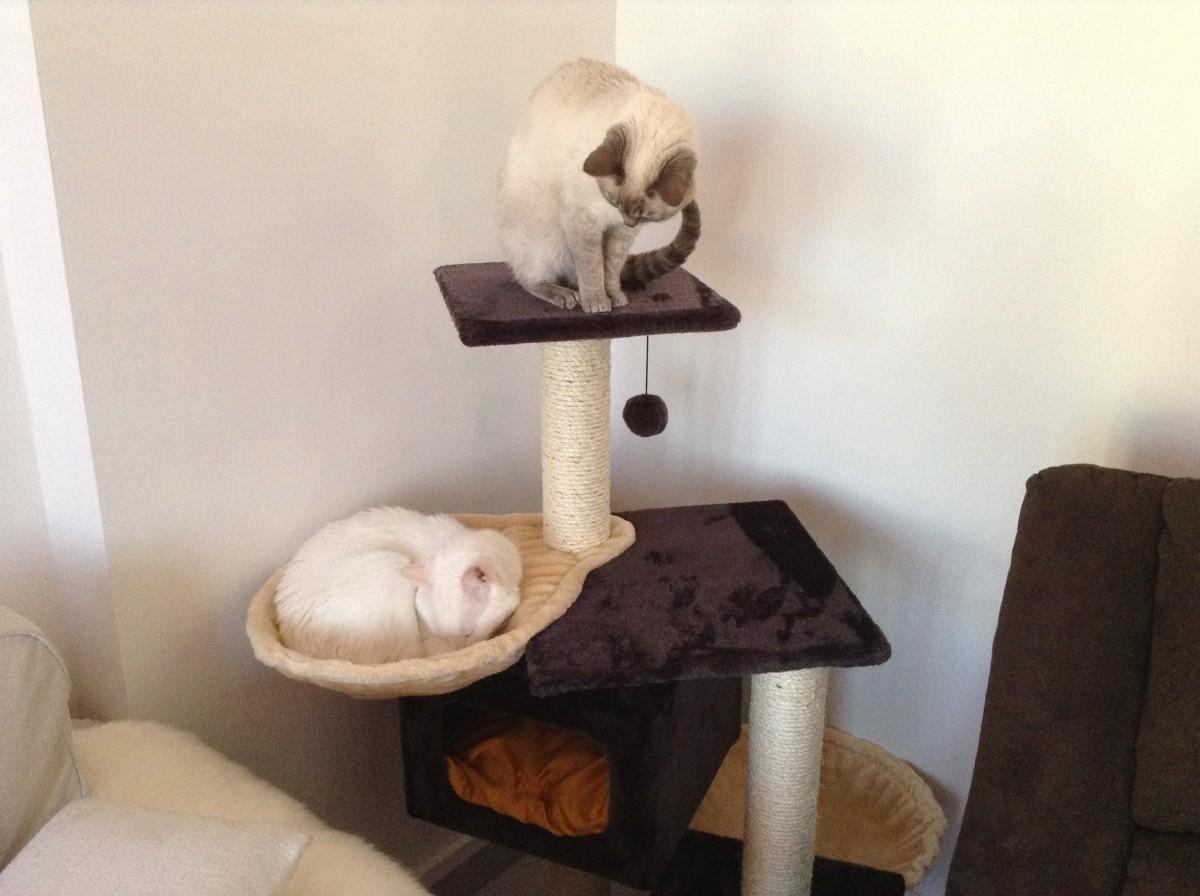nid hamac pour poteau griffoir beige pour chat arbre chat. Black Bedroom Furniture Sets. Home Design Ideas